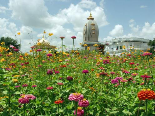 Wild-Flowers-Temple-in-background.preview